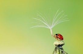Hiep-Nguyen-Hoang-Vietnam-Shortlist-Nature-Wildlife-Open-Competition-2013_PRESS